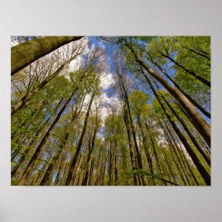 Póster mirada para arriba a los árboles en el bosque de