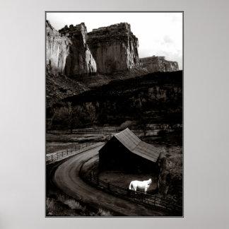Póster Monocromo del caballo blanco en el poster de