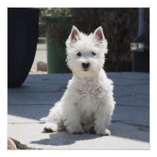 Póster Montaña del oeste blanca Terrier que se sienta en
