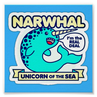 Póster Narwhal