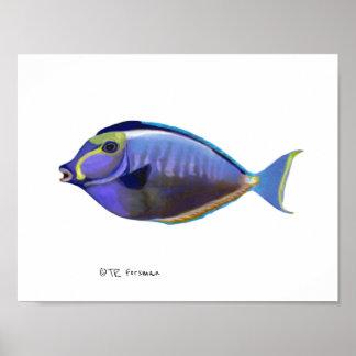 Póster Natación de los pescados que pinta 2