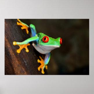Póster Naturaleza de la rana verde