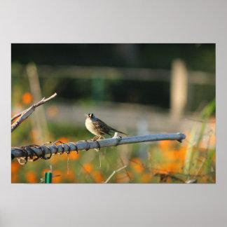 Póster naturaleza hermosa de mirada y animal del pájaro