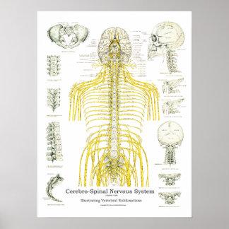 Póster Nervios espinales y poster de la quiropráctica de