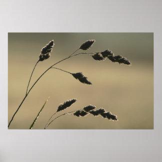 Póster Oído mojado de la hierba