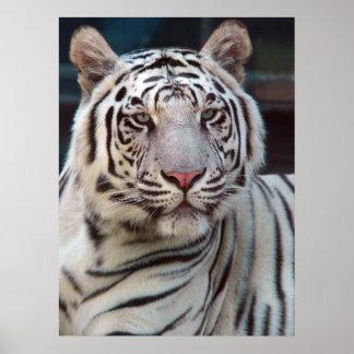 Póster Ojo del tigre