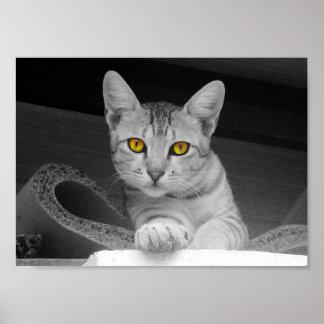 Póster Ojos de gato