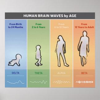 Póster Ondas cerebrales humanas por el diagrama de carta