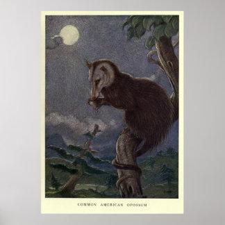 Póster Oposum Painting (1909) del vintage