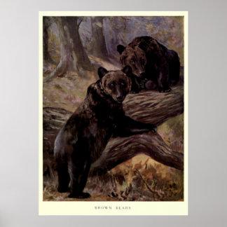 Póster Oso de Brown del vintage Painting (1909)