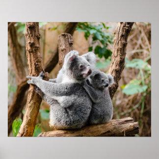 Póster Oso de koala
