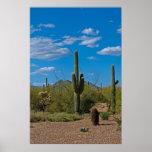 Póster Paisaje natural 3994 del cactus