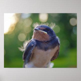 Póster Pájaro de bebé
