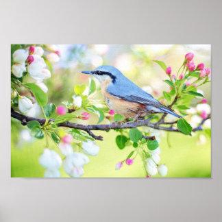 Póster Pájaro del tiempo de primavera
