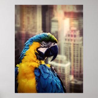 Póster Pájaro en la ciudad