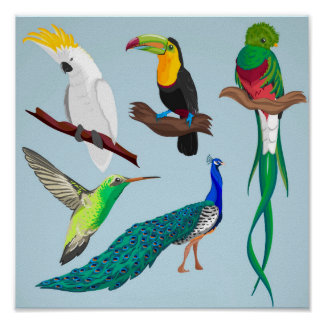 Póster Pájaros exóticos