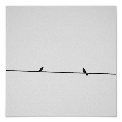 Póster Pájaros posados en blanco y negro