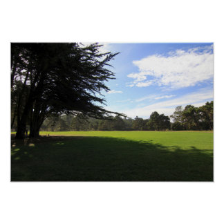 Póster Parque de Cypress