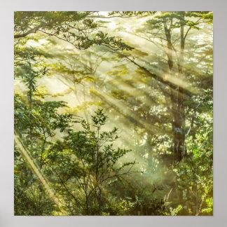Póster Parque de Queulat, paisaje del bosque de la