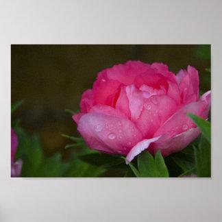 Póster Parque floral de las vides de los flores de las
