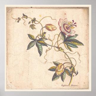 Póster Pasión botánica antigua Fower del poster de la