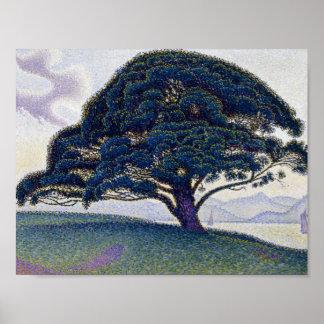 Póster Paul Signac - el pino de Bonaventure