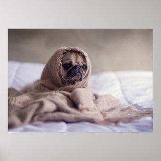 Póster Pequeña sensación del perrito el frío