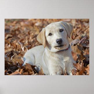Póster Perrito amarillo del labrador retriever en hojas