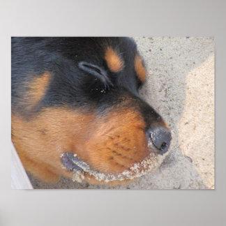 Póster Perrito de la playa
