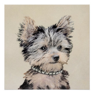 Póster Perrito de Yorkshire Terrier