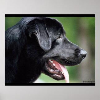 Póster Perro negro de Labrador