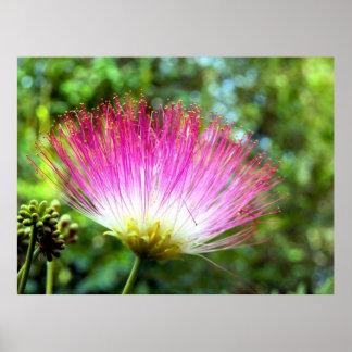Poster persa de la flor del árbol de seda póster