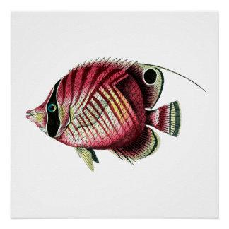 Póster Pescados coloridos exóticos
