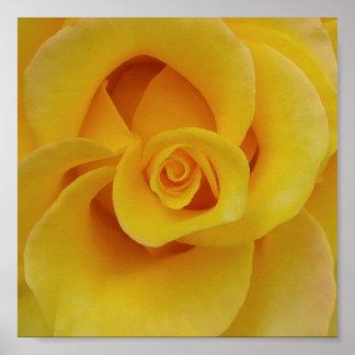 Póster Pétalos color de rosa amarillos románticos