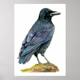 Póster Pintura de la acuarela del cuervo