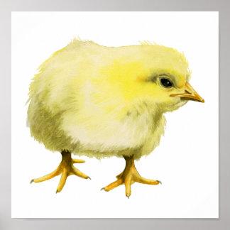 Póster Pintura de la acuarela del polluelo