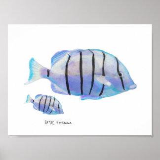 Póster Pintura de la natación de los pescados