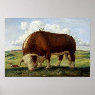 Póster Pintura del vintage de un toro de Hereford
