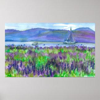 Póster Pintura púrpura de la acuarela de los Lupines del