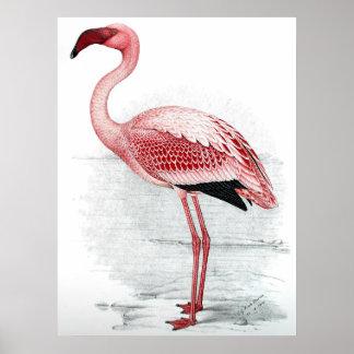 Póster Pintura rosada del flamenco del vintage