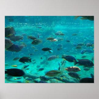 Póster Piscina azul de los cichlids que nadan alrededor d