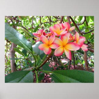Póster Plumeria hawaiano
