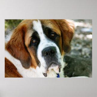 Póster poste del perro de St Bernard