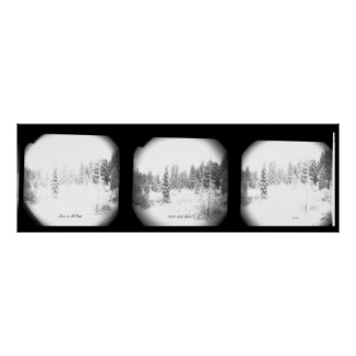 Póster Poster blanco y negro hermoso de los pinos Nevado
