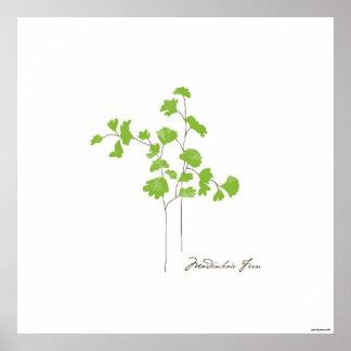 Póster Poster botánico del ilustracion el | del helecho