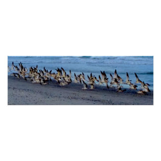 Póster Poster con la imagen de pájaros