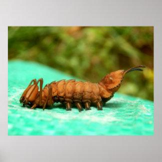 Póster Poster de Caterpillar de la polilla de la langosta