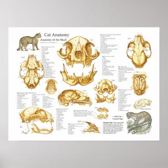 Póster Poster de la anatomía del cráneo del gato nacional | Zazzle.es