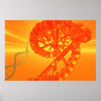 Póster Poster de la DNA