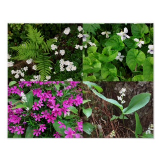 Póster Poster de la flor de la primavera del NH
